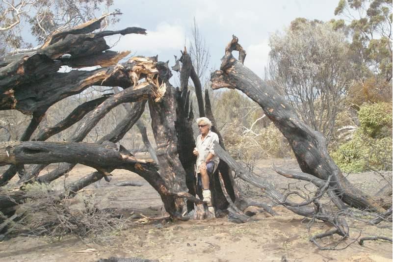 bushfire 8