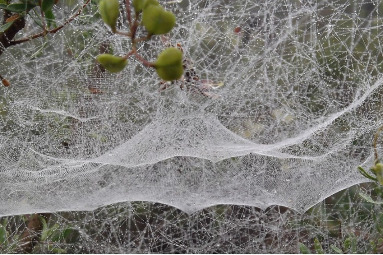 spiderwebs_1